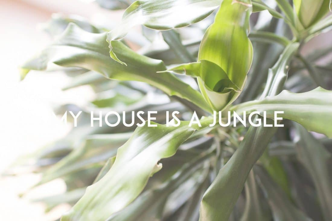 Concime Per Tronchetto Della Felicità my house is a jungle • the bluebird kitchen - food