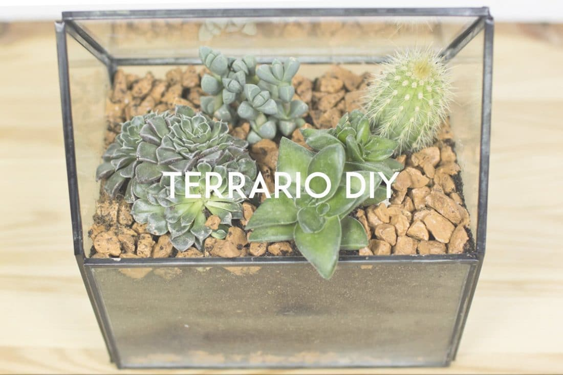 terrario
