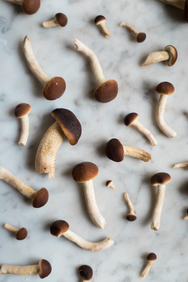 orzotto zucca e funghi